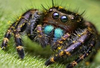 حشرات خطرناک